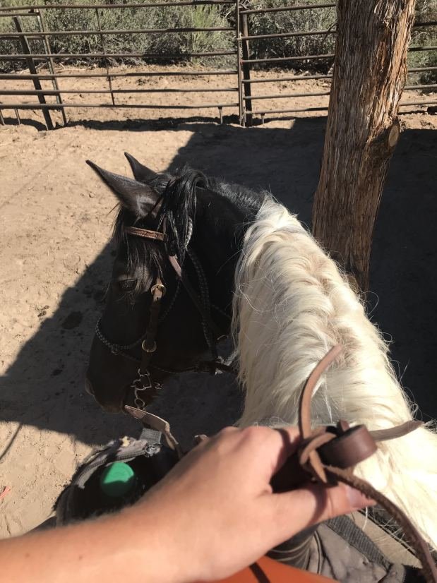Zion Canyon Horseback Riding at Zion Mountain Ranch | Zion National Park Horseback Riding