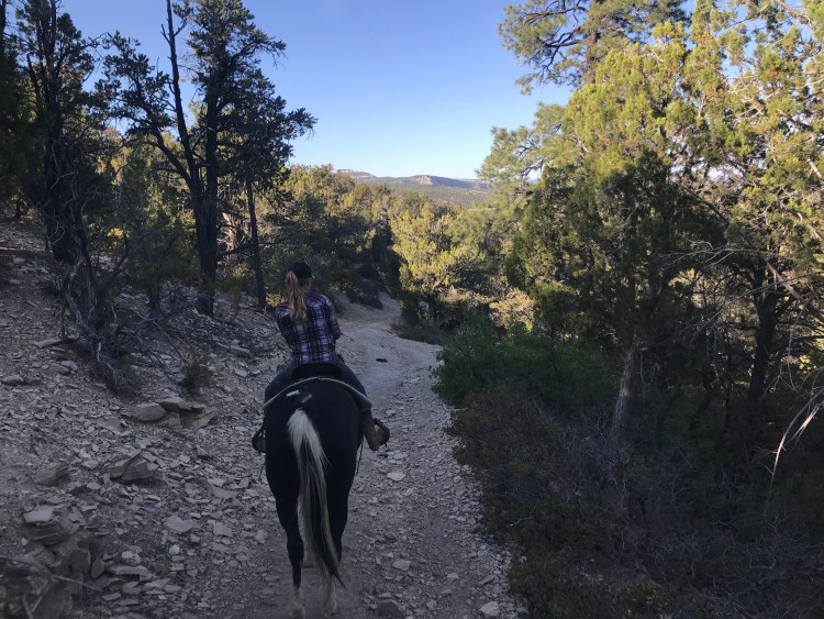 Zion Canyon Horseback Riding at Zion Mountain Ranch - pines