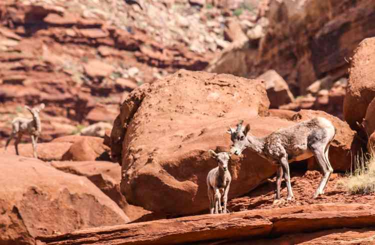 1-Day Tour of Canyonlands and Arches National Park-7667
