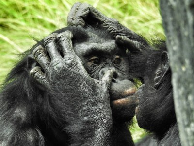 Discover the reasons and impacts of animal behaviour