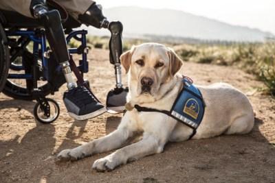 a service dog