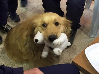 Cute therapy dog