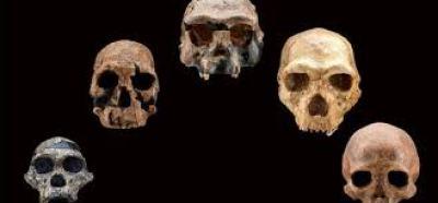 image of 5 skulls