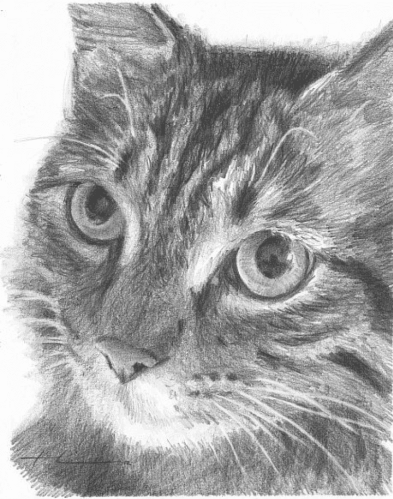 Advanced drawing of a cat with black fur and whiskers. The cat also is staring into the screen.