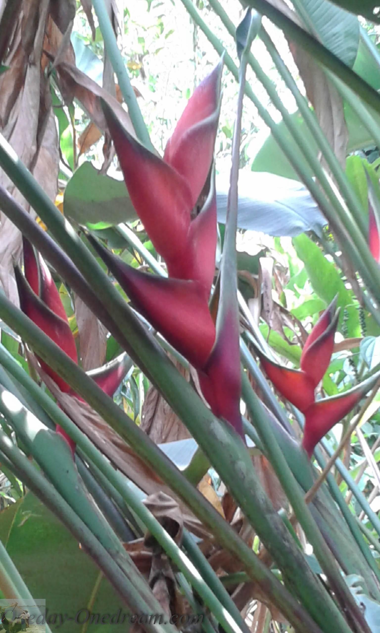 Jardin epices Kerala