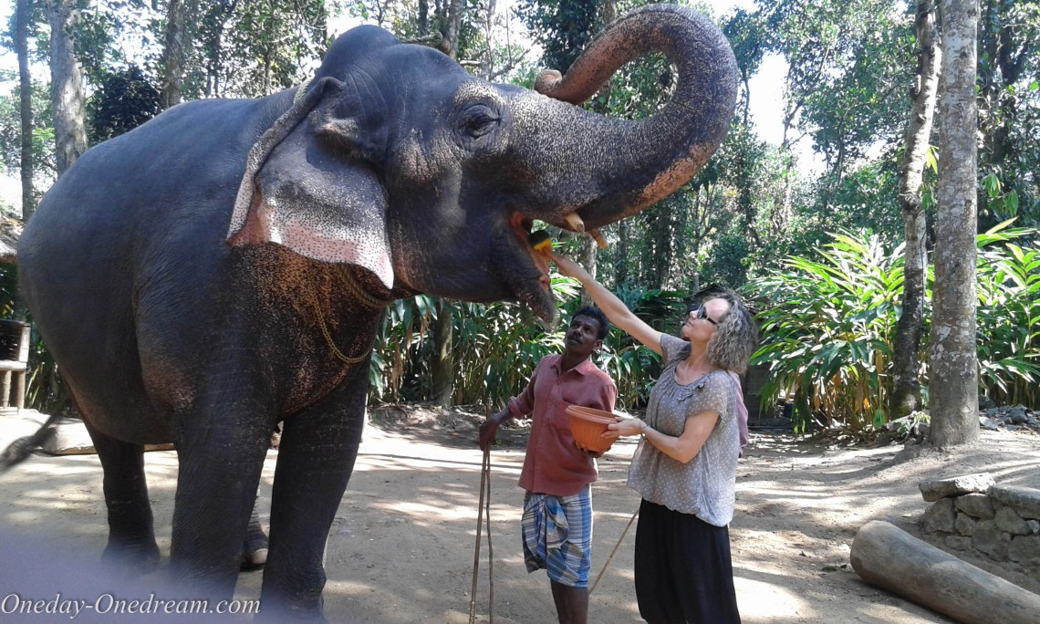 elephant-Kerala
