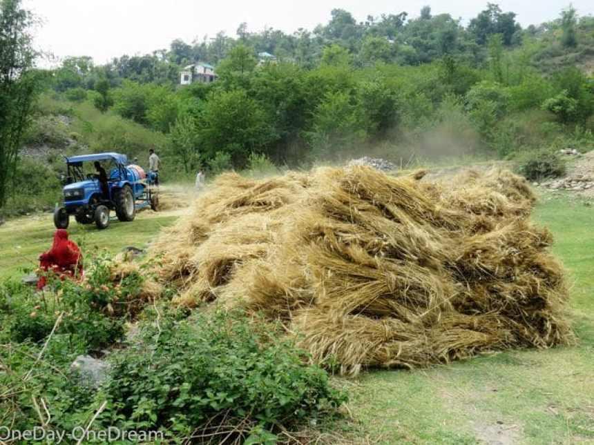 himachal-farmers