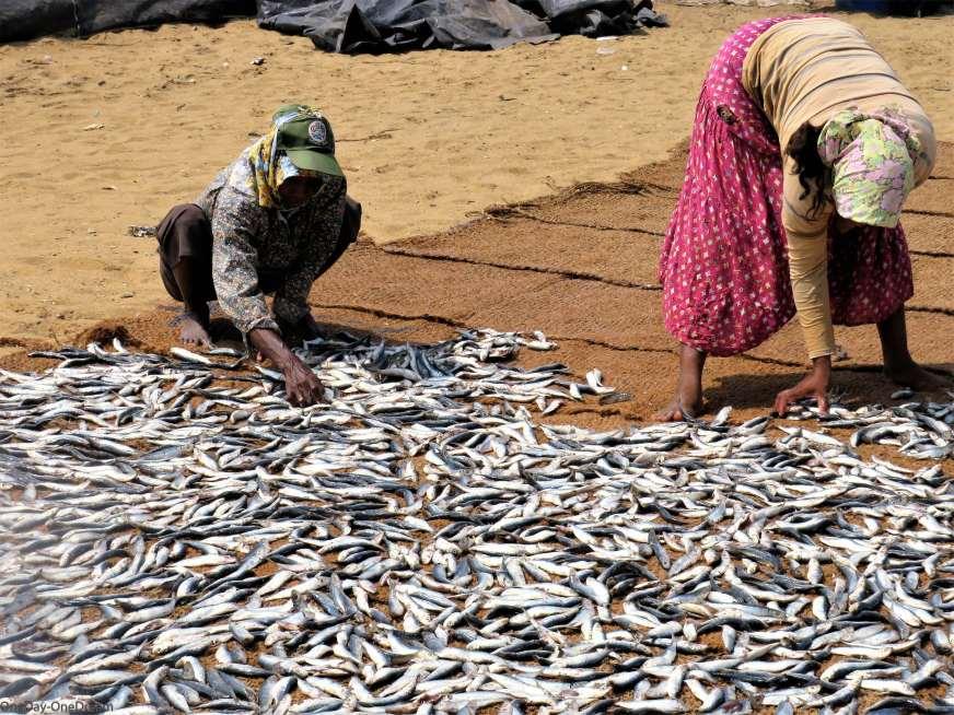 visite à ne pas manquer Negombo