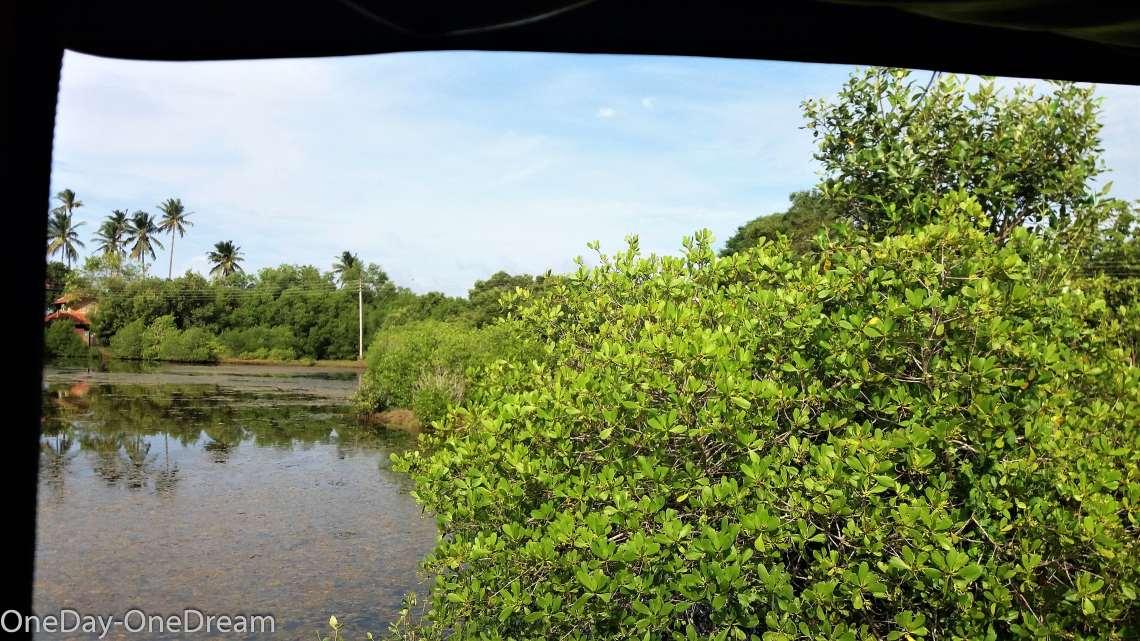 tangalle-mangrove