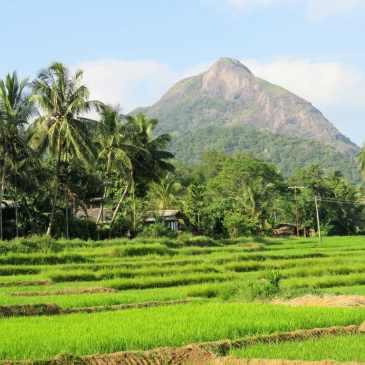 Le visa gratuit pour entrer au Sri Lanka dès le 1er mai 2019