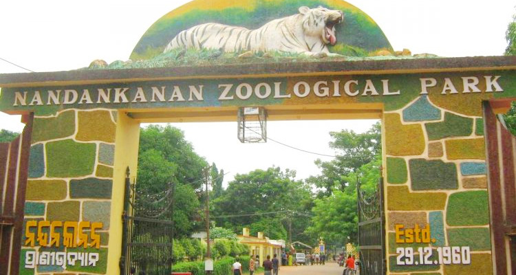 One Day Bhubaneswar Local Sightseeing Trip by Car Nandankanan Zoo