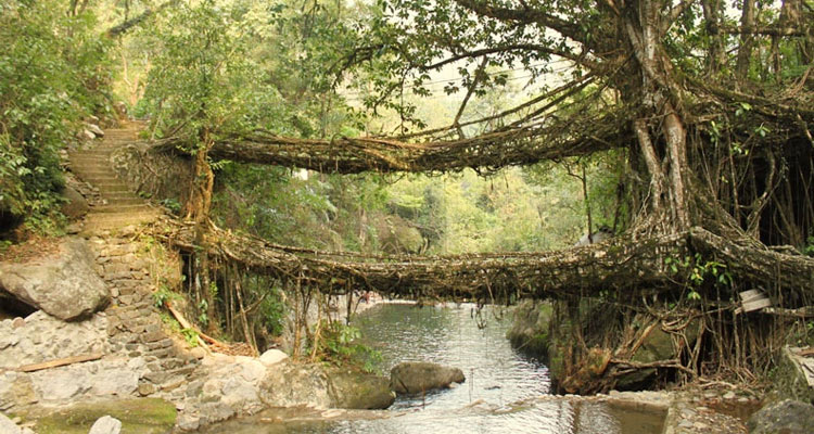 One Day Cherrapunji Local Sightseeing Trip by Car Double-Decker Living Root Bridge