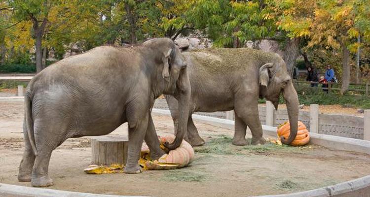 One Day Lucknow Local Sightseeing Trip by Car Nawab Wajid Ali Shah Zoological Garden