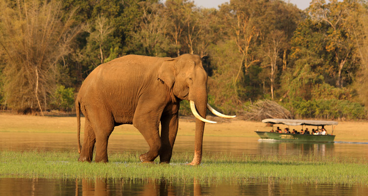 Package Glimpse One day  Mysore to Madikeri / Nagarhole Jungle Safari Tour