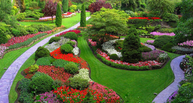 One Day Mysore to Ooty Trip by Car Ooty Rose Garden