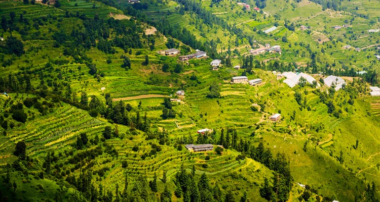 One Day Shimla & Kufri Local Sightseeing Trip by Car Fagu Valley