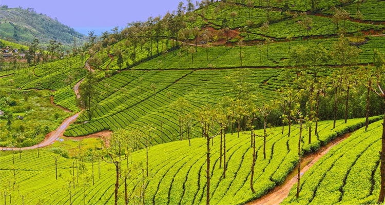 1 Day Coimbatore to Pollachi and Valparai Tour by Cab Tea Estates Valparai