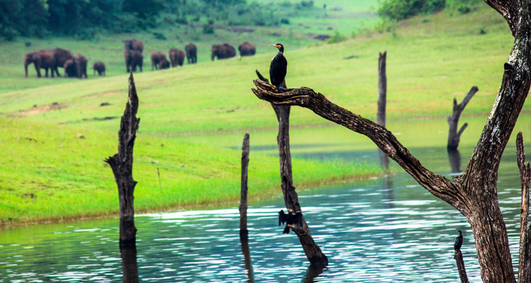 1 Day Coimbatore to Malampuzha and Athirappilly Waterfalls Tour by Cab Jungle Safari