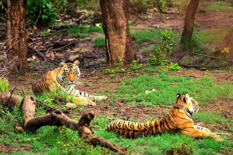 Sariska Wildlife Sanctuary with One Day Alwar Sightseeing Tour from New Delhi