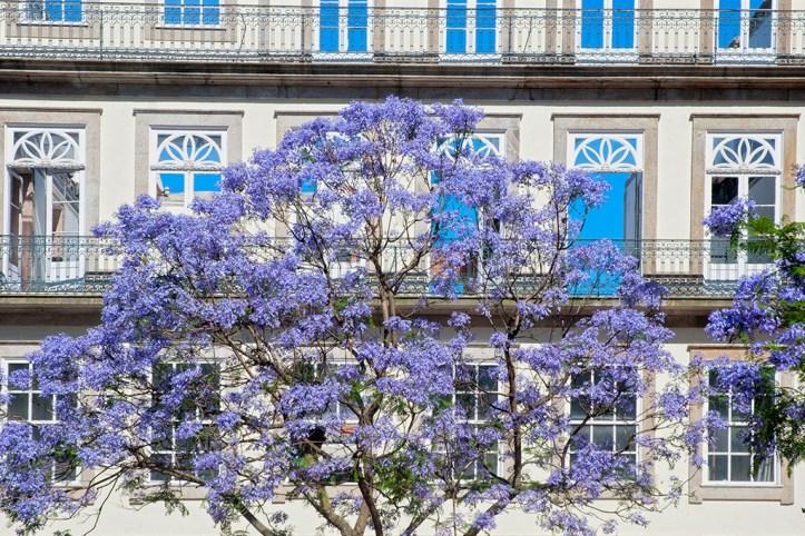 Porto in spring