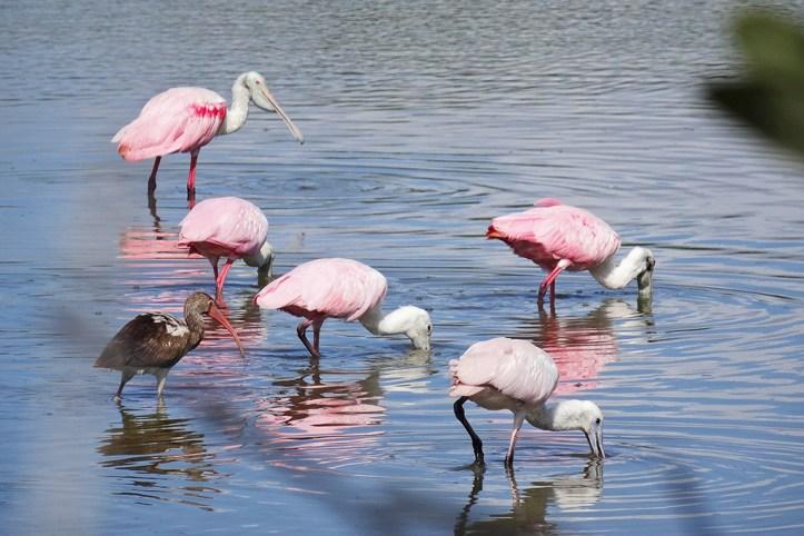 Zapata National park, Playa Larga