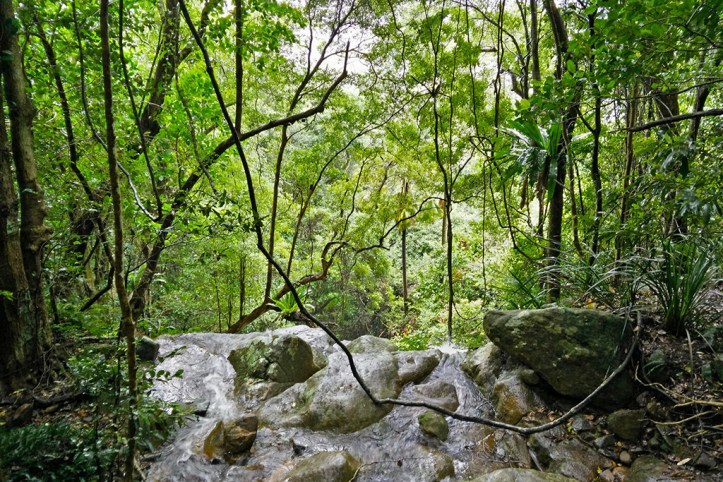 Minnamurra Rainforest, Shellharbour