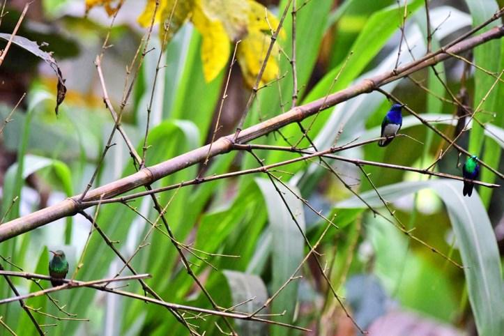 Hummingbirds in Ecuador