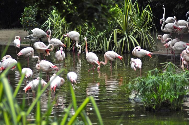 Flamingos Kowloon Park