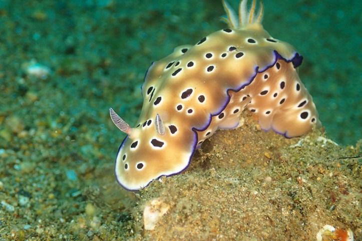 Anilao Marine Life