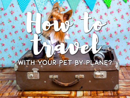How to travel with your pet by plane