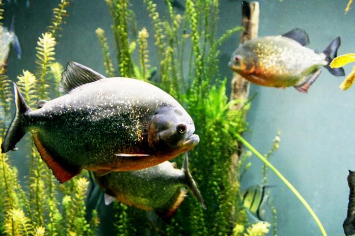 Aquarium at the Biodome