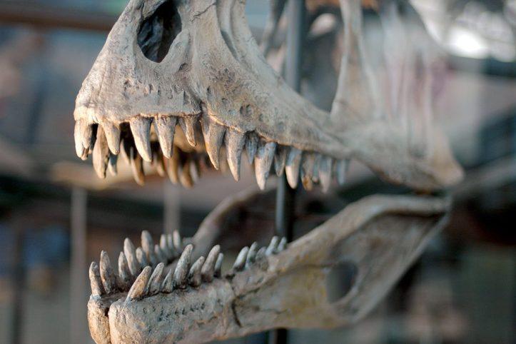 Maryland Science Centre Dinasor Skull, Baltimore