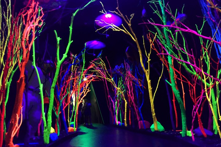 Meow Wolf - Electric Forest, Santa Fe