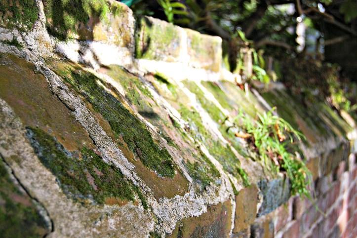 Moss-on-a-brick-wall-Charleston