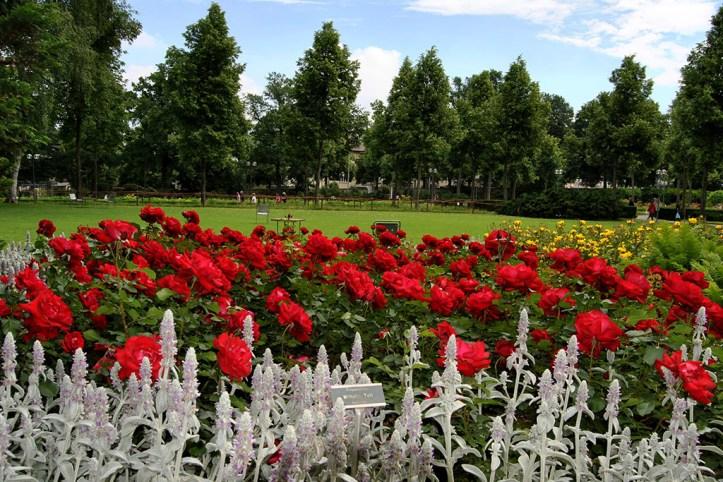 Rose Garden, Bern