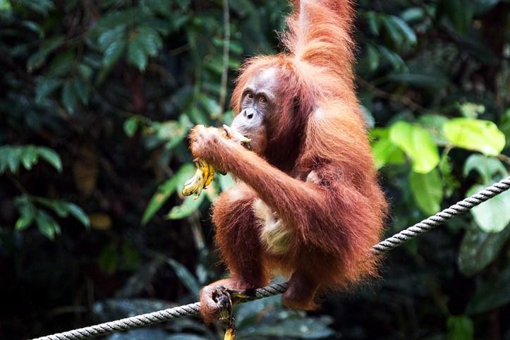 Semenggoh Wildlife Centre, Kuching