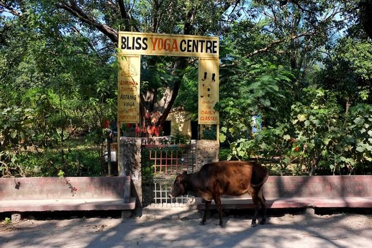 Yoga Centre, Rishikesh