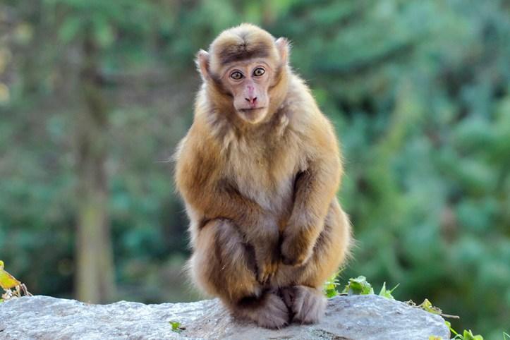 Assam State Zoo, Guwahati