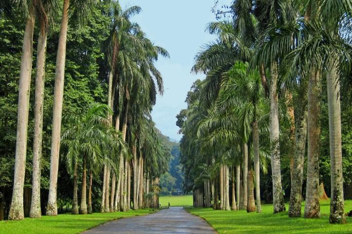 Royal Botanical Gardens Peradeniya, Kandy