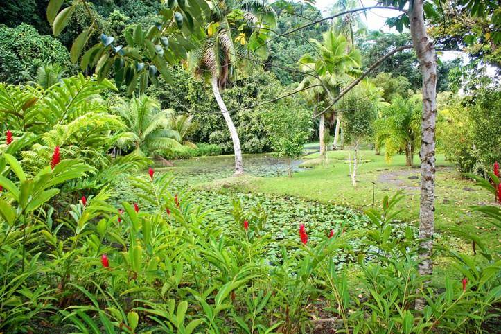 Water Gardens Vaipahi, Tahiti