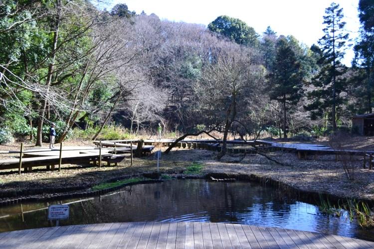 座間谷戸山公園 わきみずの谷