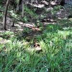 等々力渓谷の湧水