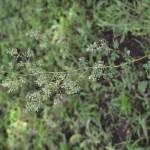 ねりまの野草観察園