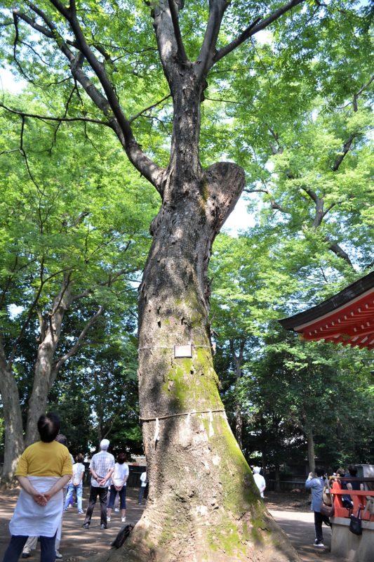 秋津神社境内で太極拳