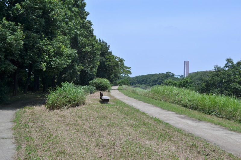 柳瀬川の土手