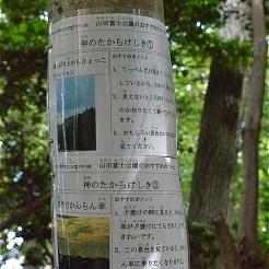 山田富士前