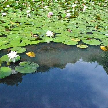 山田富士公園の池(標高25m)