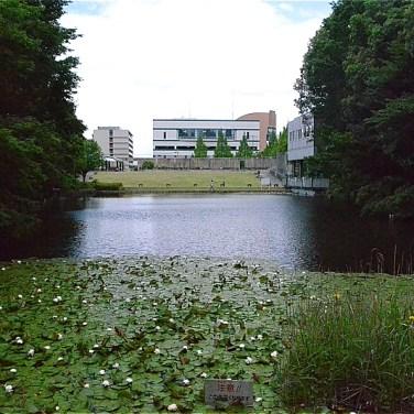 宮谷戸の大池(標高26m)