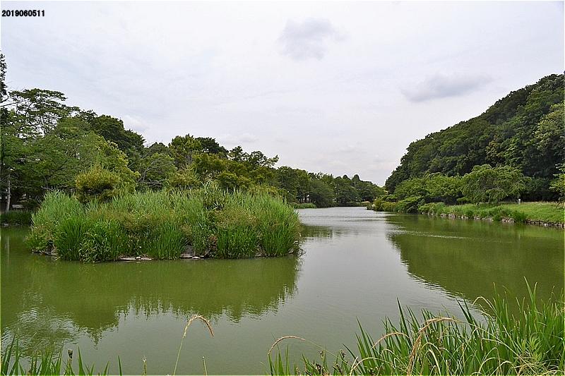 じゅん菜池緑地