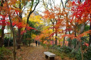 興禅院の森